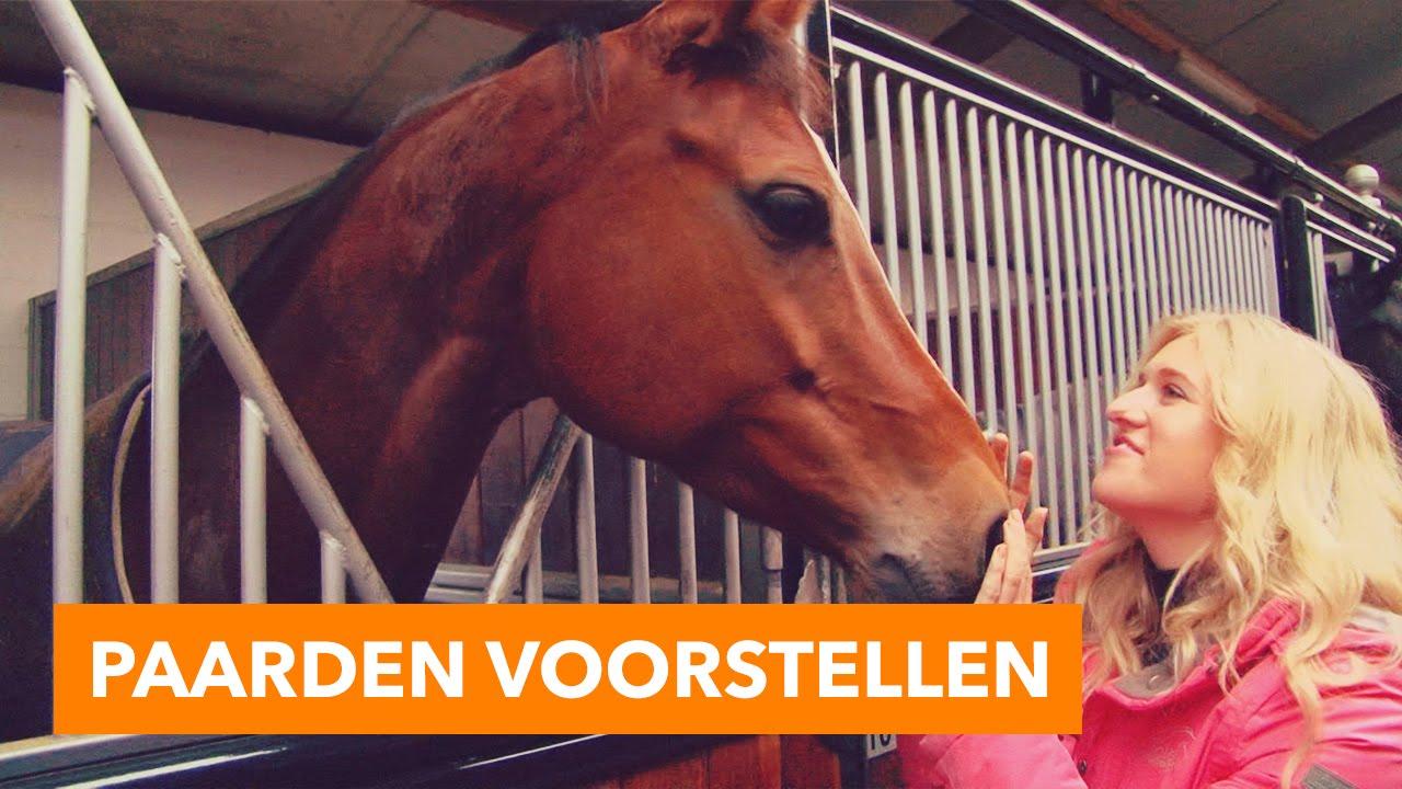 voederbieten voor paarden