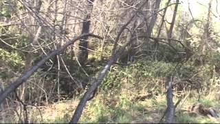 BIGFOOT RESEARCH MISSING HIKER PAUL TOMASSO 20 MARCH 2014