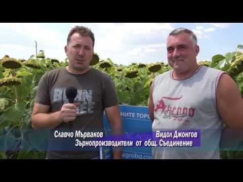 ТИМАК АГРО     - мнения на фермери от общ.Съединение