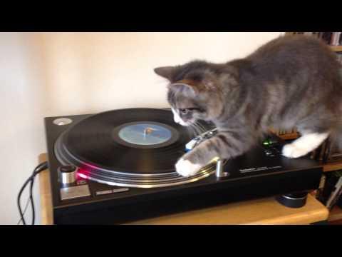 Vinyl Cat