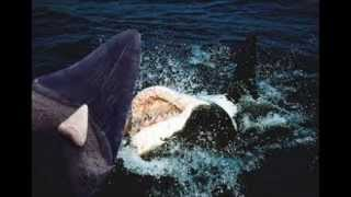 Worlds Largest Shark Ever Caught: The Megalodon Proof And
