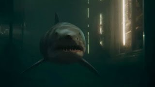 'Bait 3D' Trailer HD