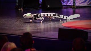 A robot that runs and swims like a salamander | Auke Ijspeert