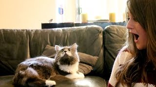 Hanging with the MUSTACHE CAT!