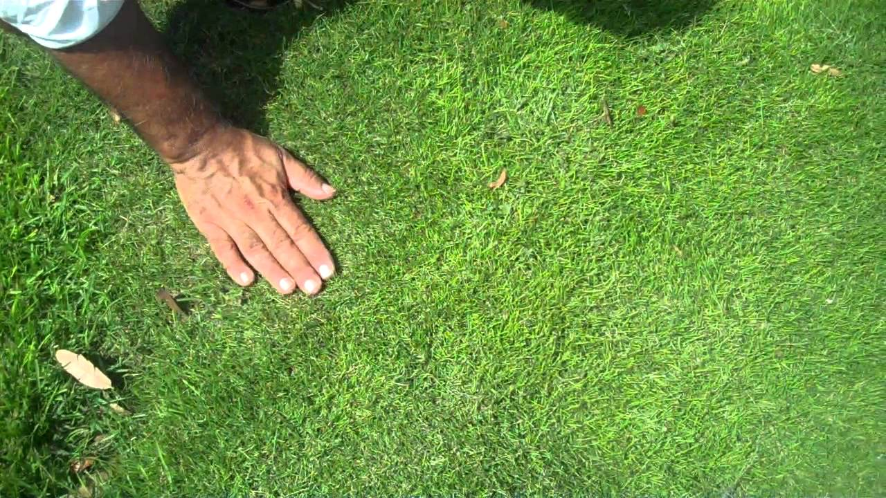 how to get kikuyu out of buffalo grass