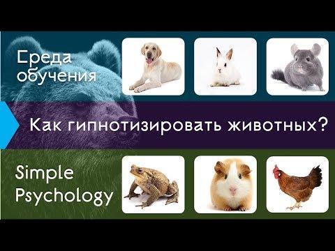 Гипноз животных: от теории к практике.