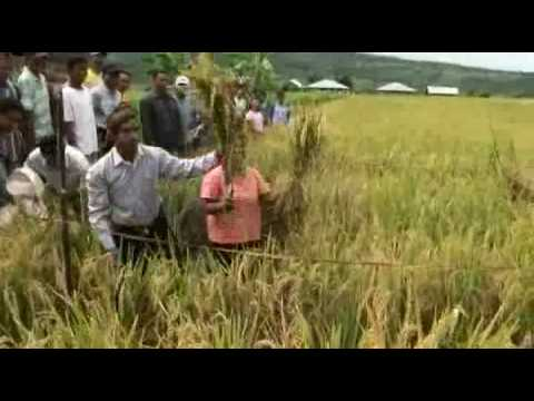 Organic System of Rice Intensification Part 1/3