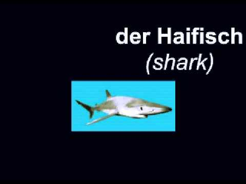 Learn German - words for animals