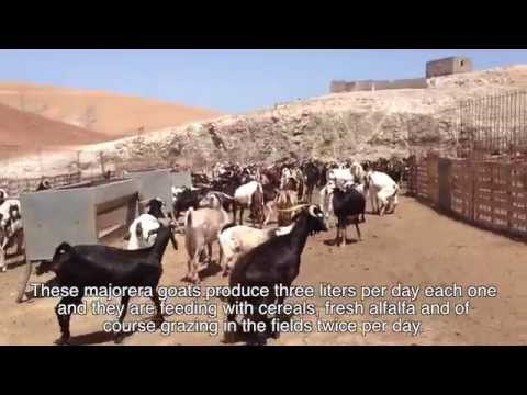 Olmeda Orígenes - Majore Cheese - How it is made...