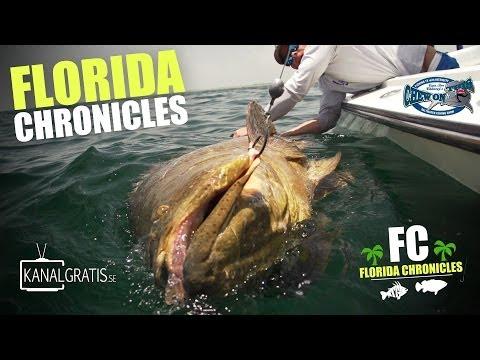 Chroniques de Floride, à la recherche des mérous géants