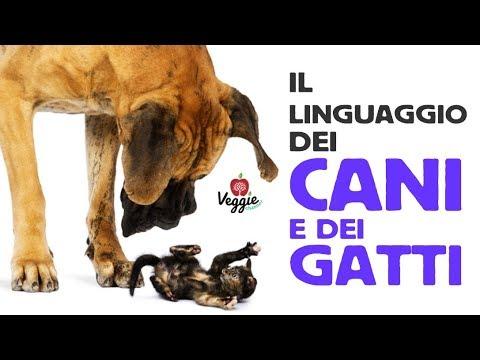 Il linguaggio dei cani e dei gatti - Mariarosa Gavardi