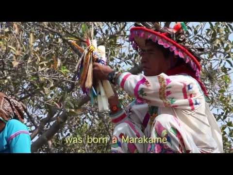 Wixaritari- Huicholes - TEOKARI- Documentary Trailer