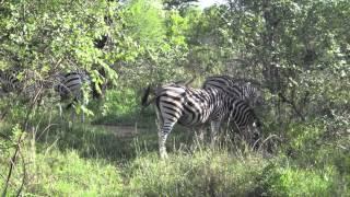Africa Vida Selvagem