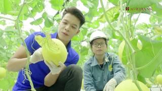 Nông nghiệp sạch số 263 - Rau công nghệ cao Thanh Hoá