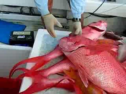 Guam Bottom Fishing