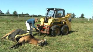 How To Lift A Horse Who Cannot Get Up