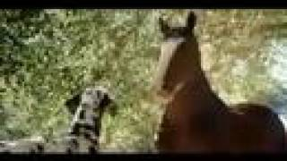 Funny Budweiser Clydesdales Superbowl Ad Hank The Clydesdale
