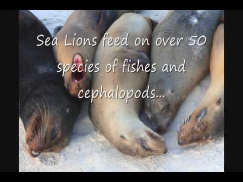 Marine Bio Sea Lions