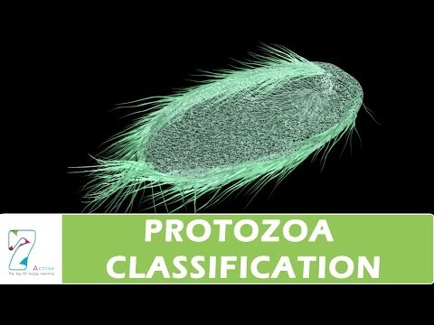 Protozoa Classification