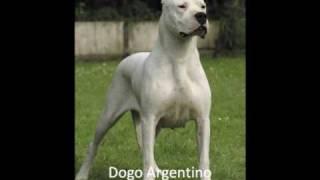 Perros más peligrosos del mundo