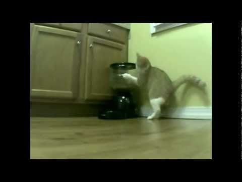 2 Days of Cat vs. Automatic Feeder