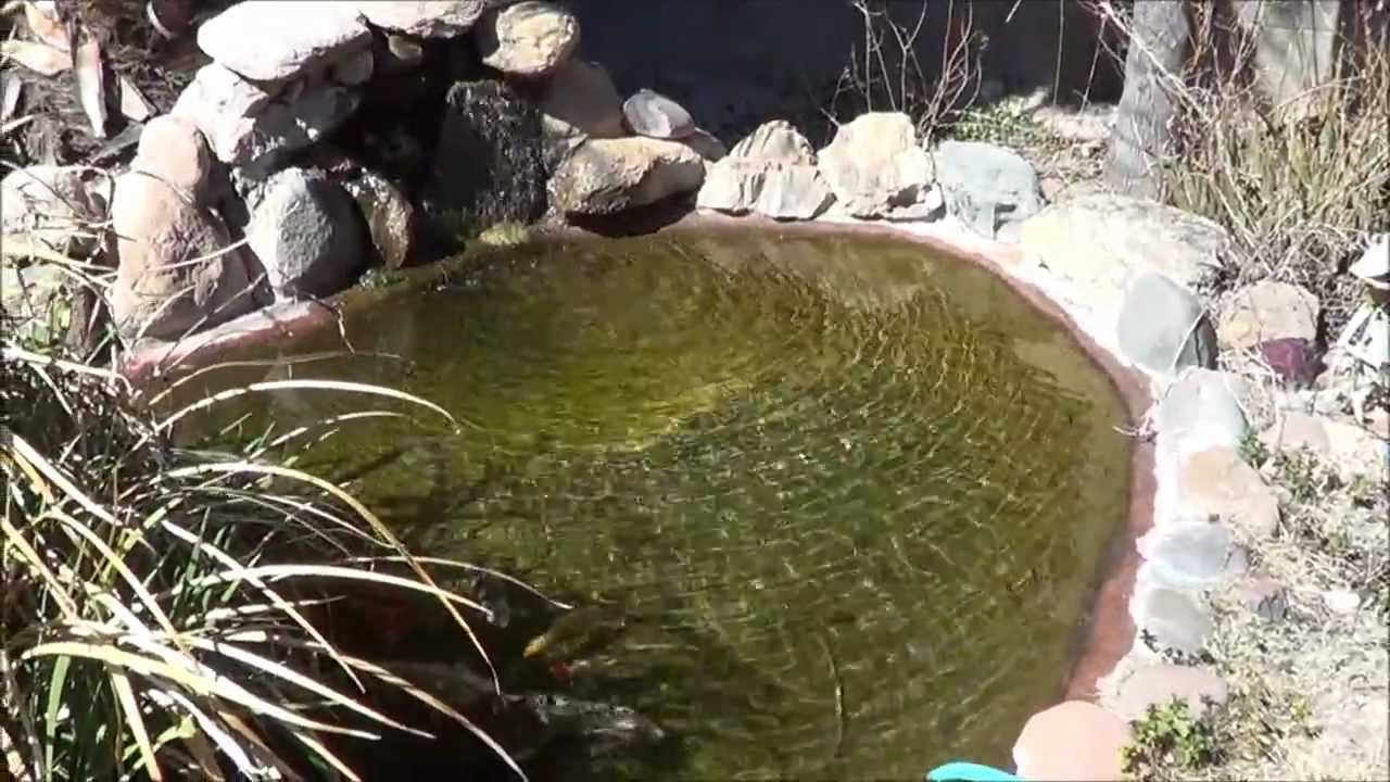 Pond homemade bio filter part 9 an update youtube for Homemade biofilter for duck pond