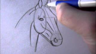 How To Draw A Simple Horsehead