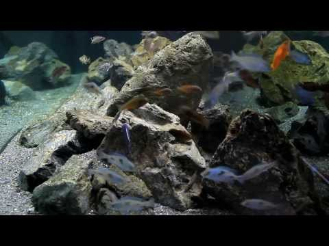 Mixed Cichlid aquarium with a refined Hamburg Matten Filter