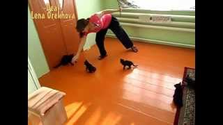 [Playful kittens on a fishing rope] Video