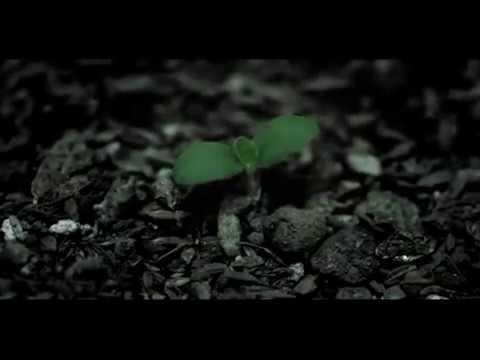 【PV】 藍坊主 『伝言』