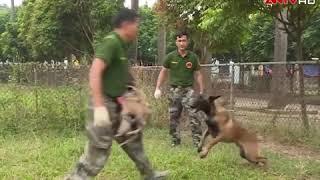 Kỹ năng xử lý khi bị chó giữ tấn công 1
