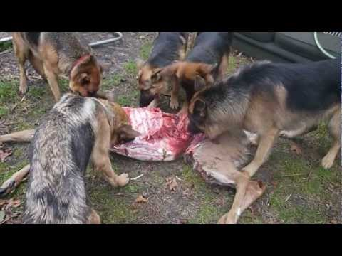 Can A Dog Eat Deer Bones