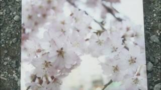 九州男「桜道」PV (Full ver.)