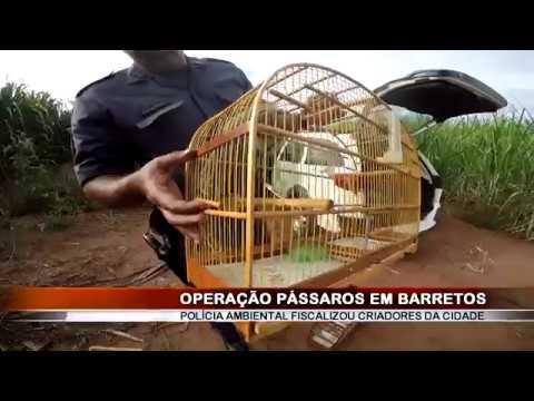 19/02/2018 - Polícia Militar Ambiental realiza Operação Pássaros em Barretos