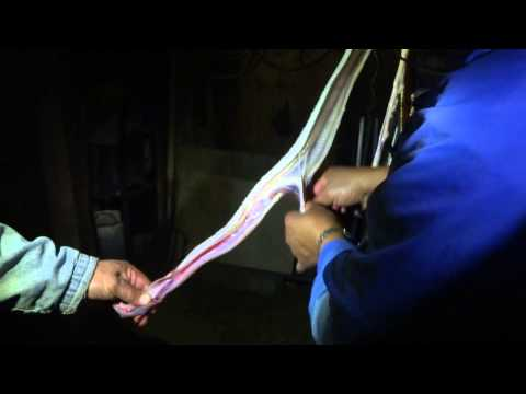 abriendo una serpiente de cascabel