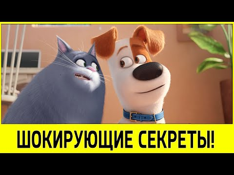 Where to Watch The Secret Life of Pets Online - Moviefone
