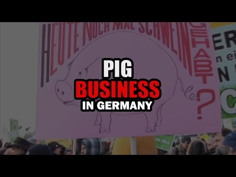 Pig Business in Germany