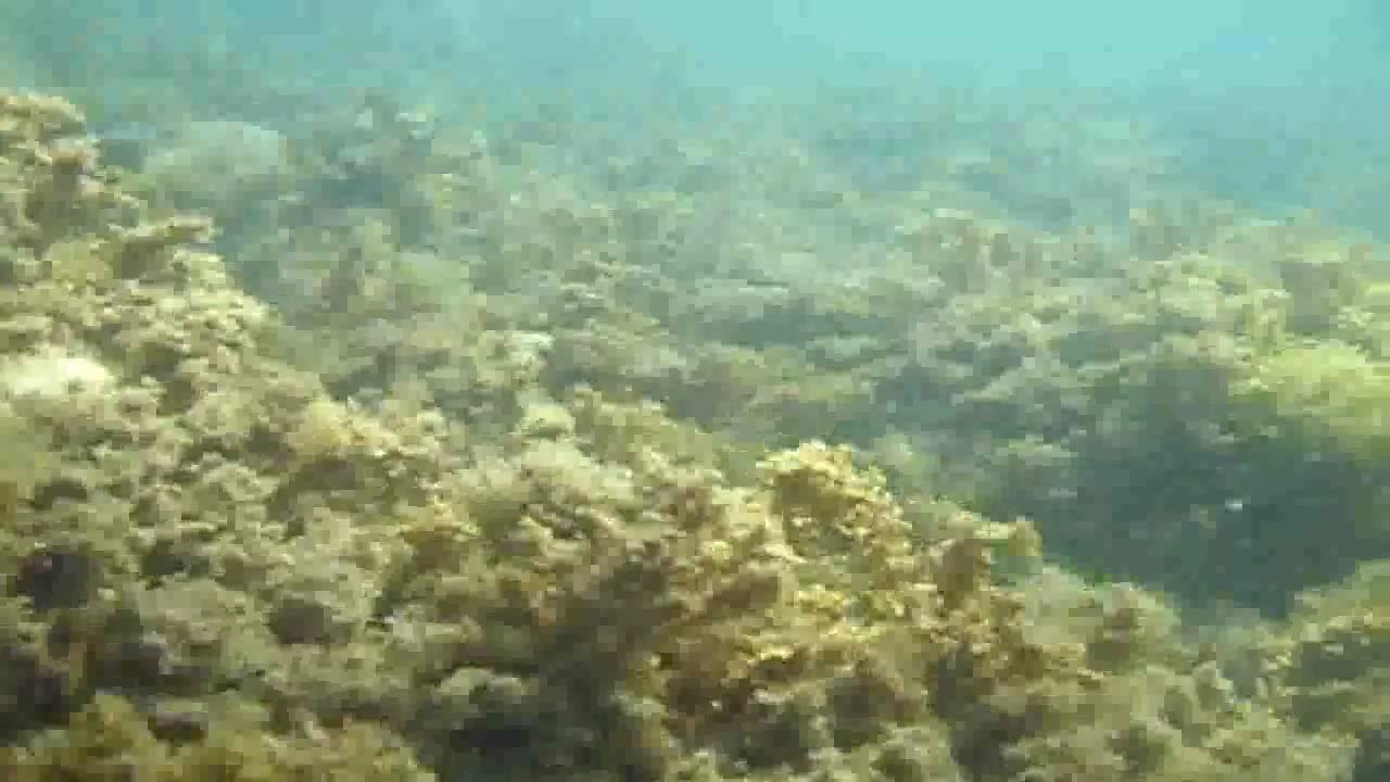 Vistas fondo del mar taliarte gran canaria sonido real - Fotos fondo del mar ...