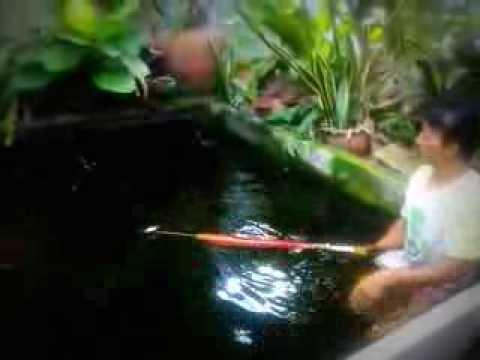 ปืนดำน้ำยิงปลา3