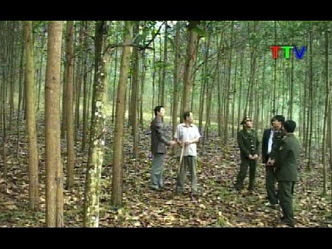 Hiệu quả bước đầu từ các mô hình trồng rừng gỗ lớn tại Thanh Hóa
