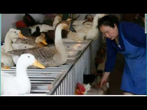 World's First H5N6 Bird Flu Death Reported In China