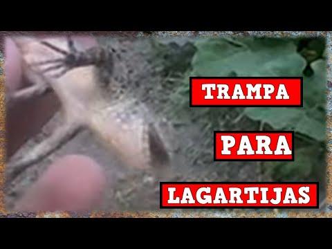 Trampa Para Iguanas, Lagartijas y otros reptiles automatica casera