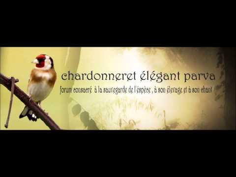 Chant Chardonneret de France 2006 Top