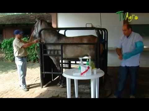 Tecnologia de reproduccion de Equinos - Juan Gonzalo Angel TvAgro
