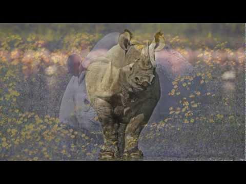 African rhino poaching crisis