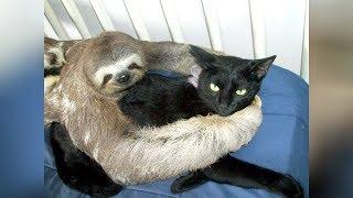 Zvierací kamaráti