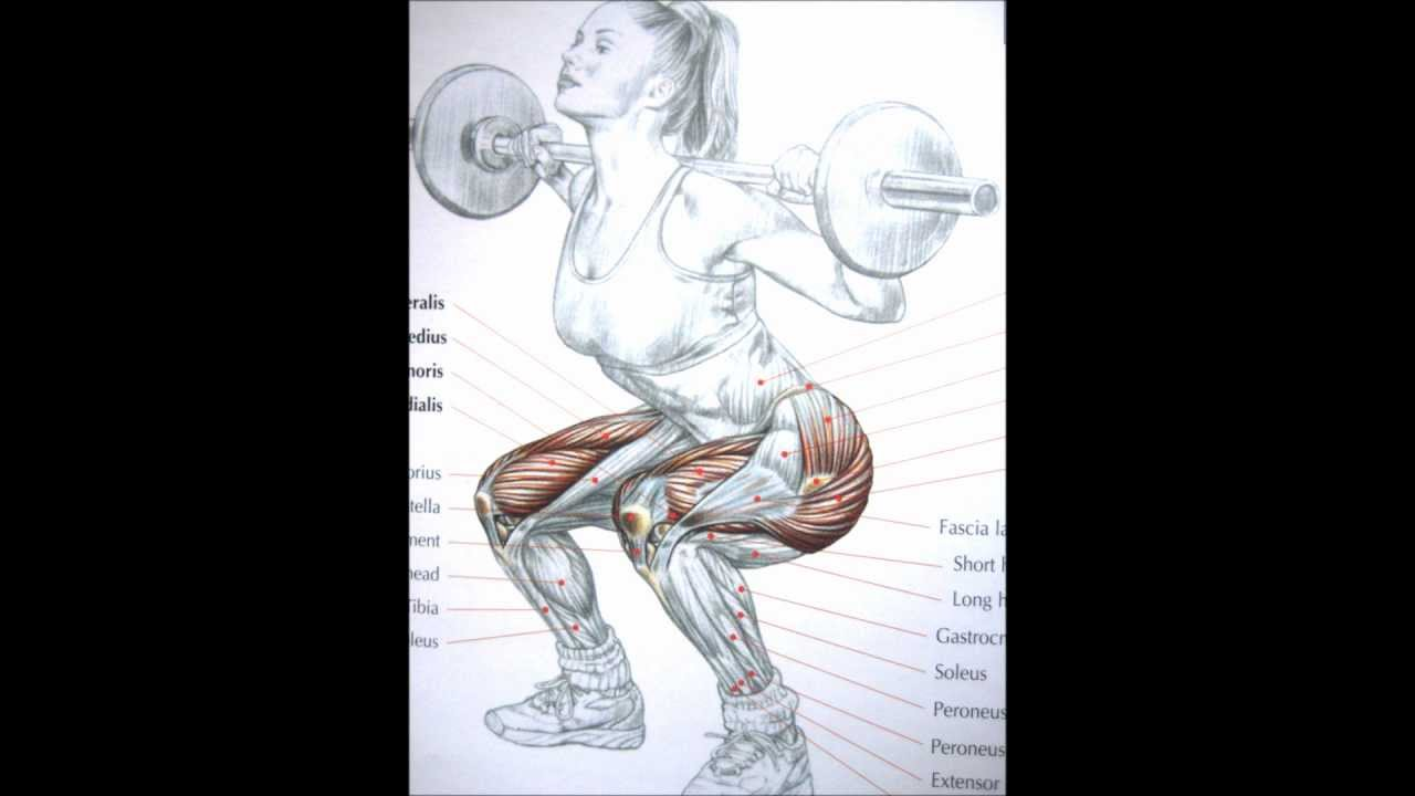 Bodybuilding Leg Exercises and Anatomy - YouTube