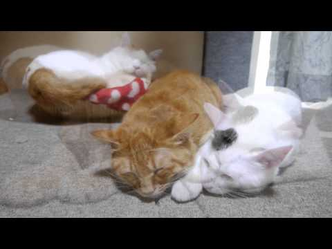 Cats sleep tight., http://kagonekoshiro.blog86.fc2.com/blog-entry-5243.html