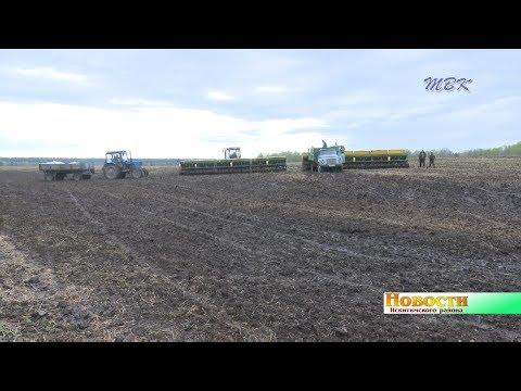 Урожай обещает стать золотым. Аграрии района подстраиваются под погоду и на ходу меняют севооборот