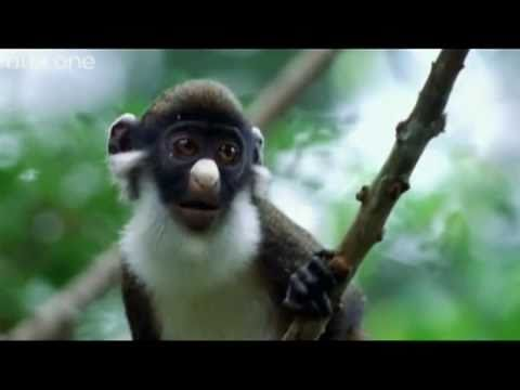 funny talking animals   walk on the wild side   the best